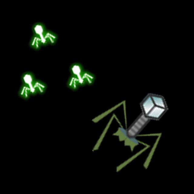 T4 Phage
